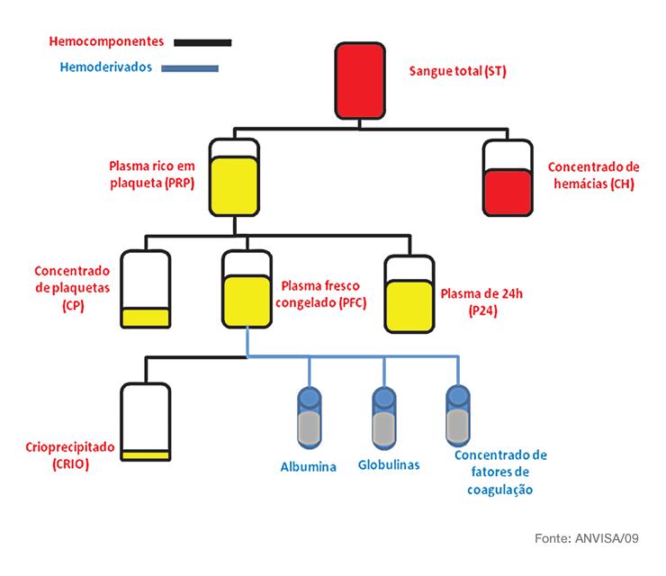 Esquema de processamento de hemocomponentes